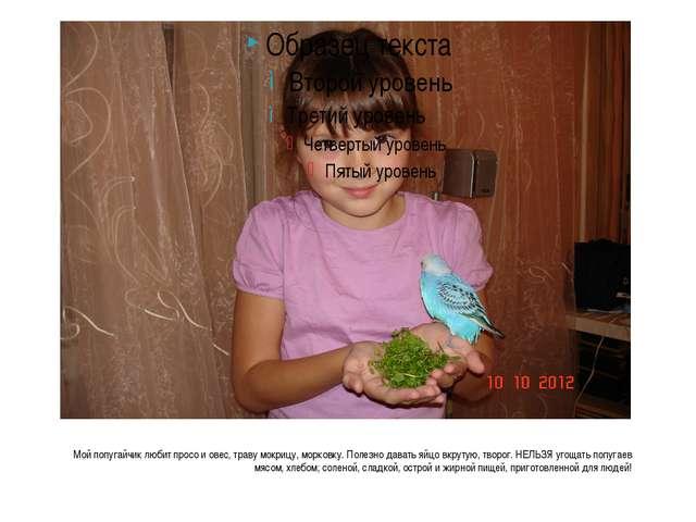 Мой попугайчик любит просо и овес, траву мокрицу, морковку. Полезно давать я...