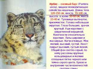 Ирбис – снежный барс (Pantera uncia), хищное млекопитающее семейства кошачьих