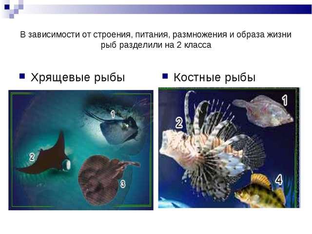 В зависимости от строения, питания, размножения и образа жизни рыб разделили...