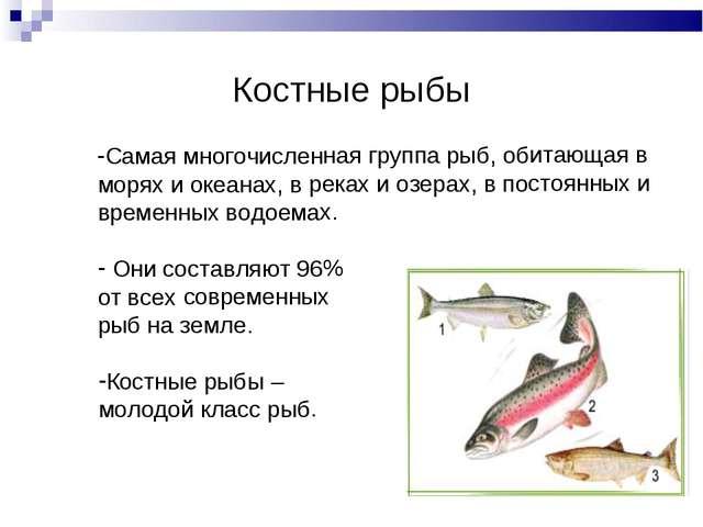 Костные рыбы Самая многочисленная группа рыб, обитающая в морях и океанах, в...