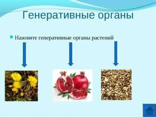 Генеративные органы Назовите генеративные органы растений