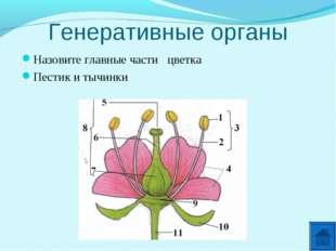 Генеративные органы Назовите главные части цветка Пестик и тычинки
