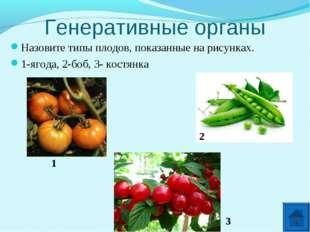 Генеративные органы Назовите типы плодов, показанные на рисунках. 1-ягода, 2-