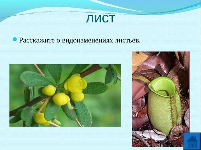 лист Расскажите о видоизменениях листьев.