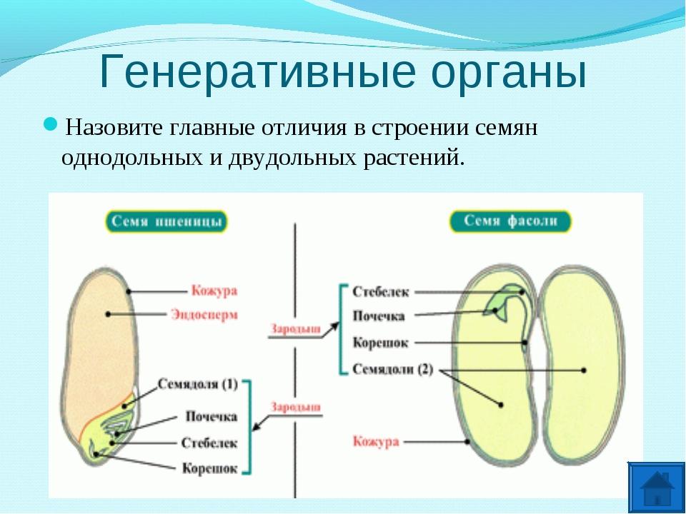 Генеративные органы Назовите главные отличия в строении семян однодольных и д...