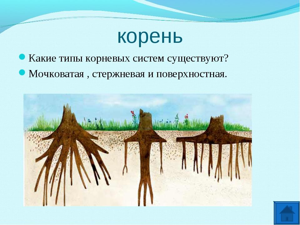 корень Какие типы корневых систем существуют? Мочковатая , стержневая и повер...