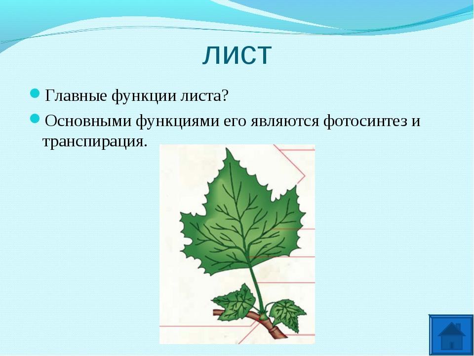 лист Главные функции листа? Основными функциями его являются фотосинтез и тра...