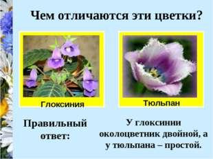 Чем отличаются эти цветки? Глоксиния Тюльпан Правильный ответ: У глоксинии ок