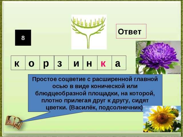 8 Простое соцветие с расширенной главной осью в виде конической или блюдцеобр...