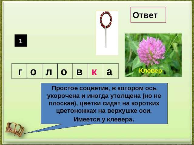 Простое соцветие, в котором ось укорочена и иногда утолщена (но не плоская),...