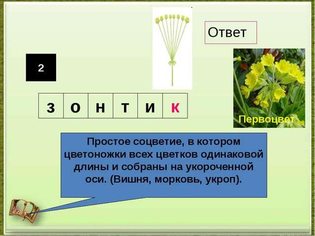 2 Простое соцветие, в котором цветоножки всех цветков одинаковой длины и собр...