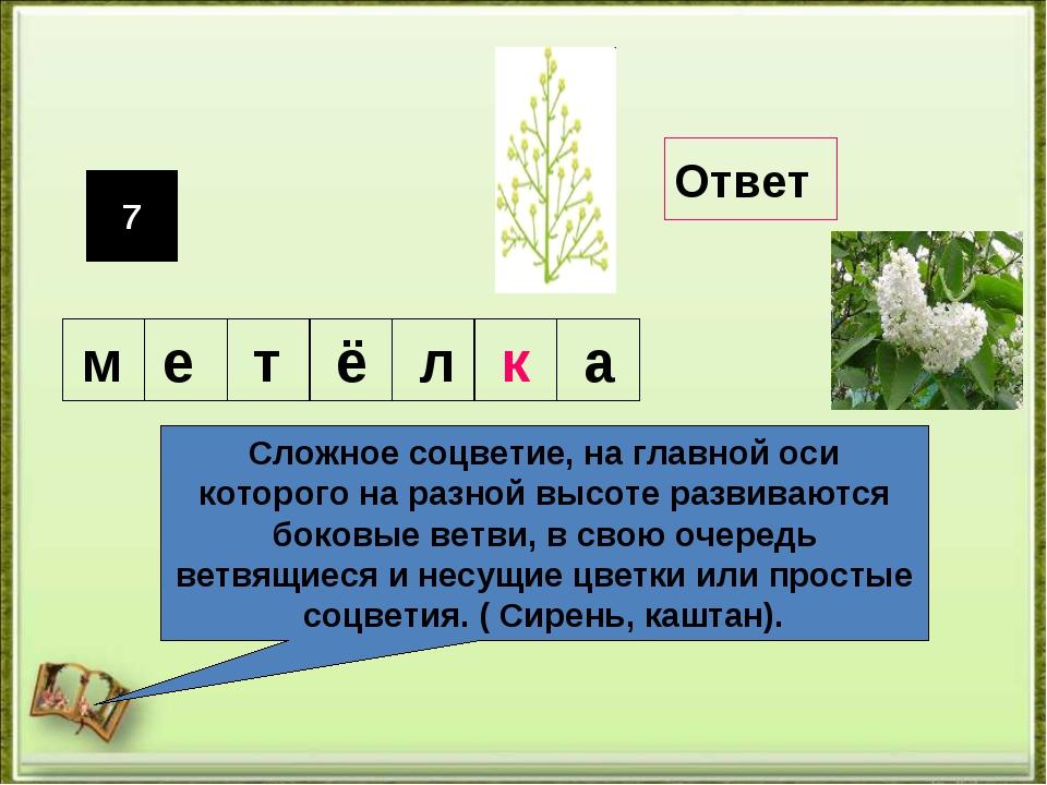 7 Сложное соцветие, на главной оси которого на разной высоте развиваются боко...