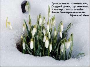 Прошла весна, - темнеет лес, Скудней ручьи, грустнее ивы, И солнце с высоты н
