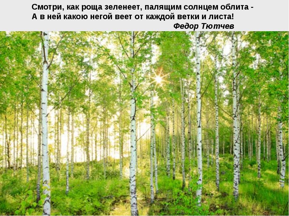 Смотри, как роща зеленеет, палящим солнцем облита - А в ней какою негой веет...