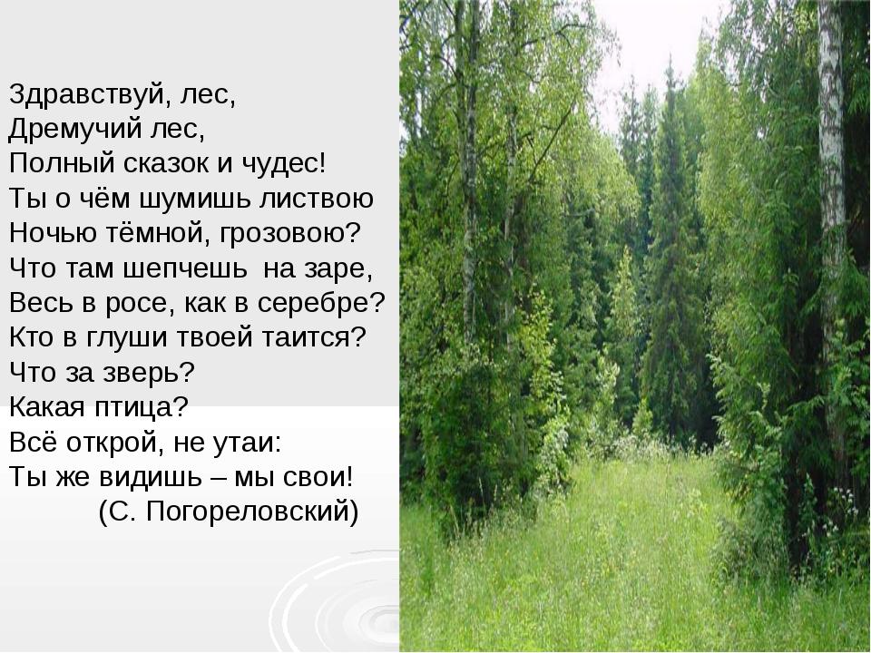 Здравствуй, лес, Дремучий лес, Полный сказок и чудес! Ты о чём шумишь листво...
