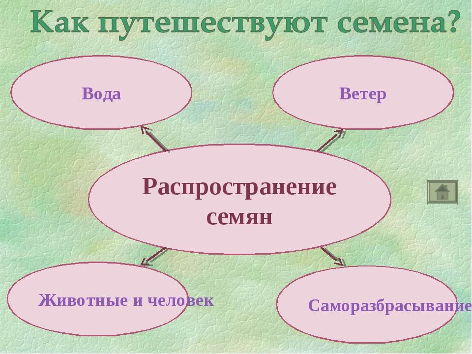 """Презентация """"Размножение растений семенами"""" к уроку окружающего мира для 2 класса"""