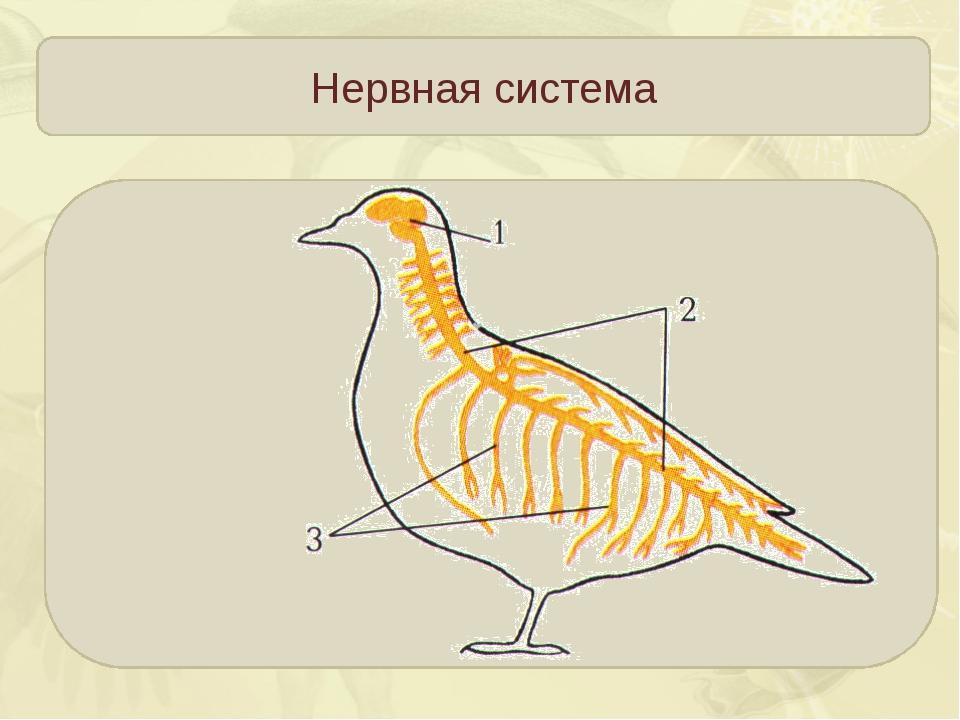 Картинка внутреннее строение птицы