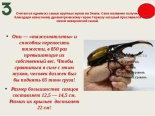 Считается одним из самых крупных жуков на Земле. Свое название получил благод