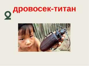 дровосек-титан