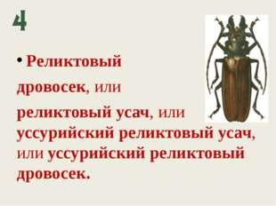 Реликтовый дровосек, или реликтовый усач, или уссурийский реликтовый усач, ил