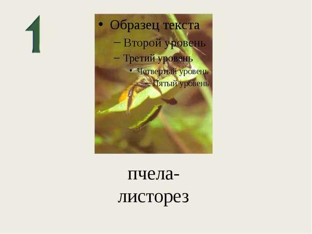 пчела-листорез
