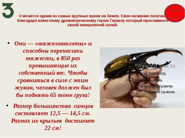 Считается одним из самых крупных жуков на Земле. Свое название получил благод...