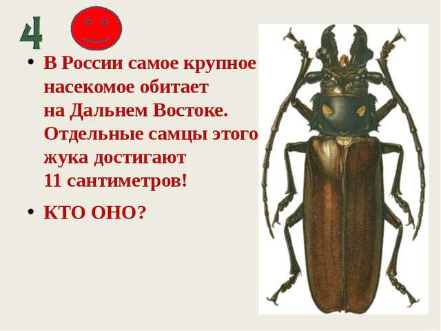 В России самое крупное насекомое обитает наДальнем Востоке. Отдельные самцы...