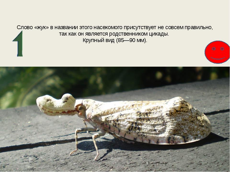 Слово «жук» в названии этого насекомого присутствует не совсем правильно, так...