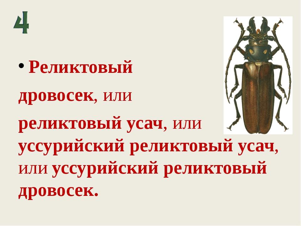 Реликтовый дровосек, или реликтовый усач, или уссурийский реликтовый усач, ил...