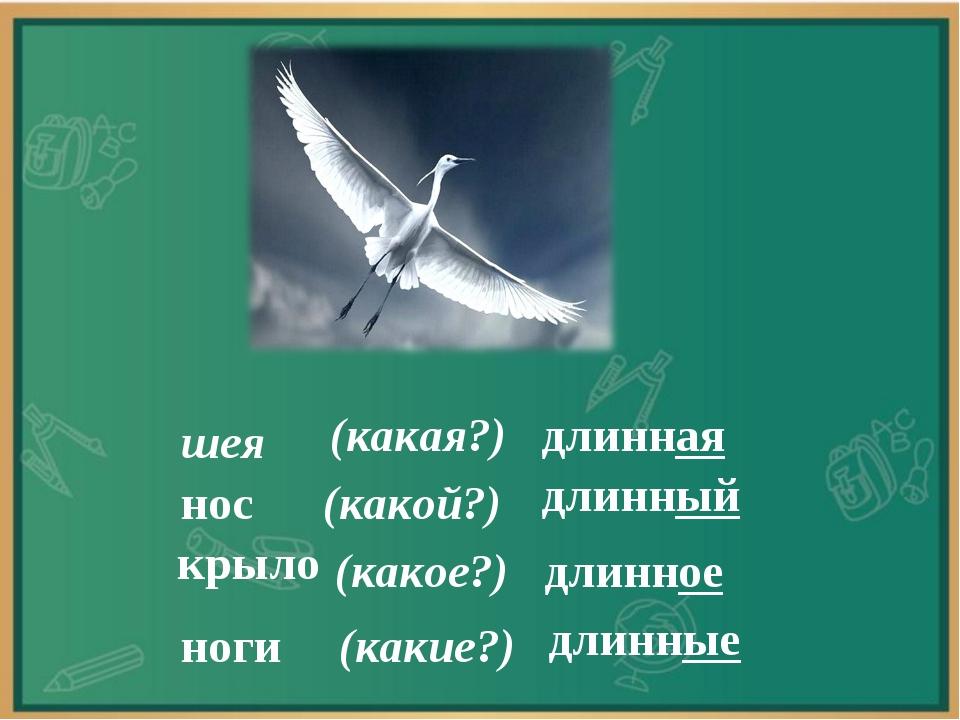 шея (какая?) длинная нос длинный (какой?) крыло (какое?) длинное ноги (какие?...