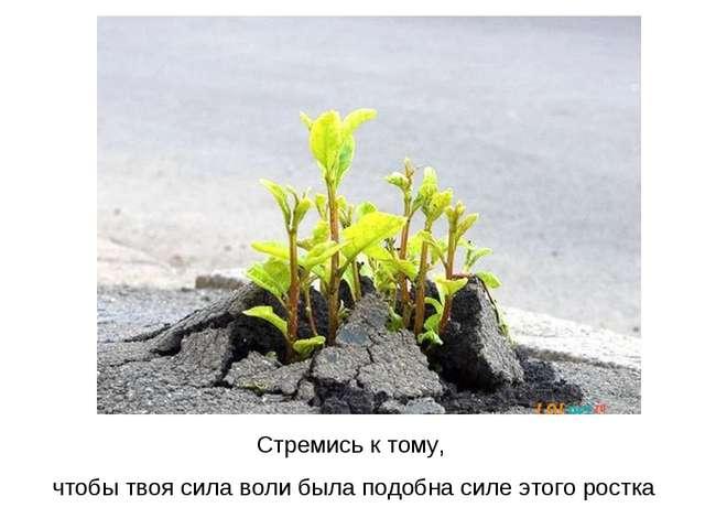 Стремись к тому, чтобы твоя сила воли была подобна силе этого ростка
