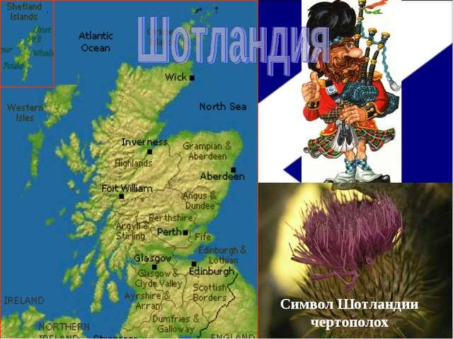 Символ Шотландии чертополох