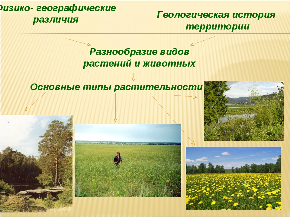 Разнообразие видов растений и животных Физико- географические различия Геолог...