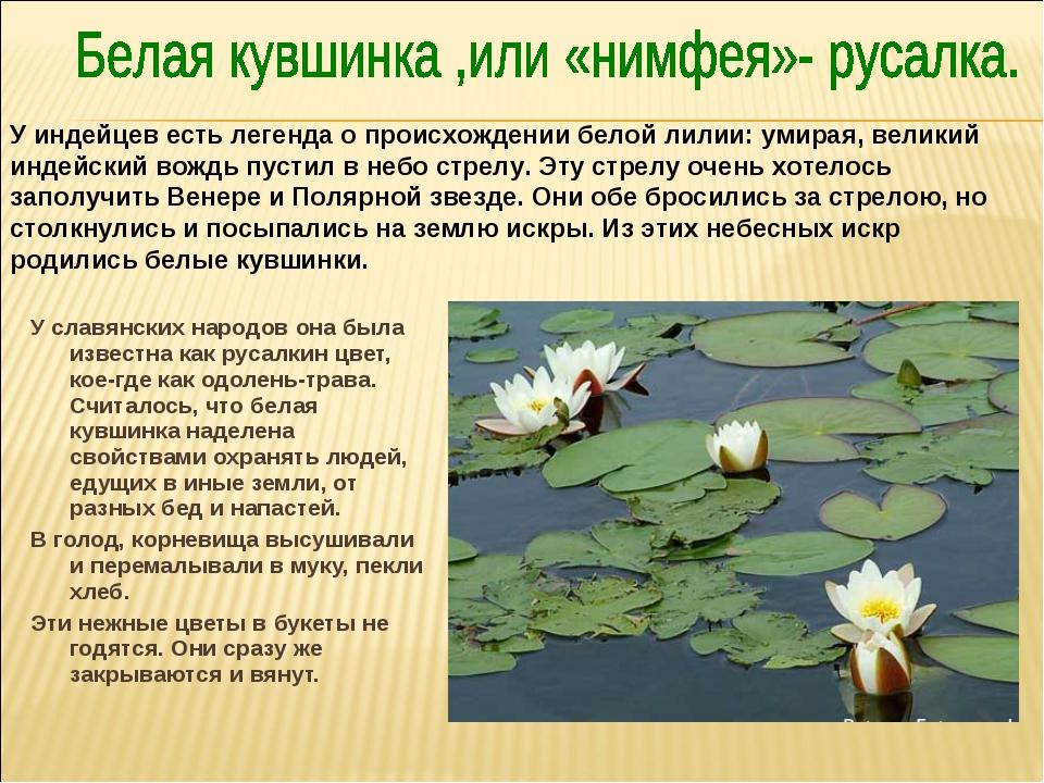 У славянских народов она была известна как русалкин цвет, кое-где как одолень...