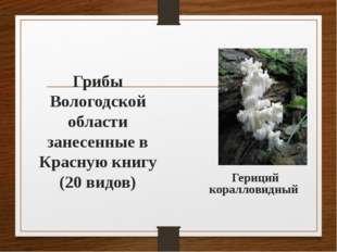 Грибы Вологодской области занесенные в Красную книгу (20 видов) Гериций корал