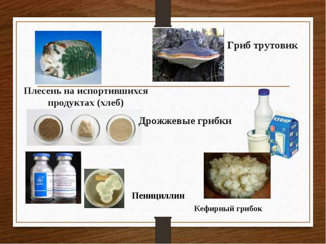 Плесень на испортившихся продуктах (хлеб) Дрожжевые грибки Гриб трутовик