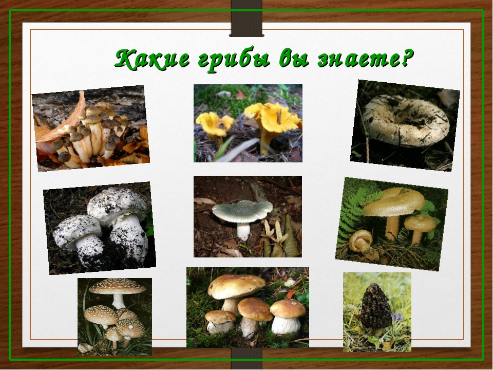 Какие грибы вы знаете?