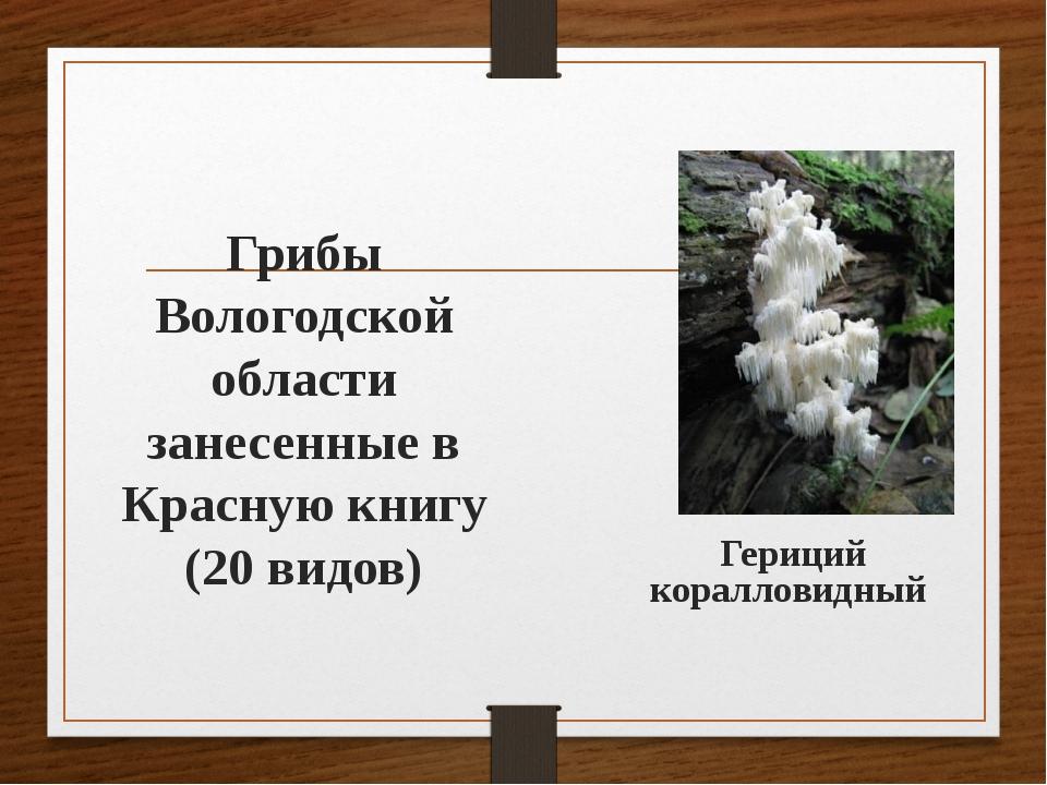 Грибы Вологодской области занесенные в Красную книгу (20 видов) Гериций корал...