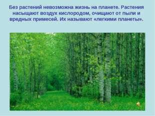 Без растений невозможна жизнь на планете. Растения насыщают воздух кислородом