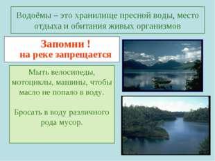 Водоёмы – это хранилище пресной воды, место отдыха и обитания живых организмо