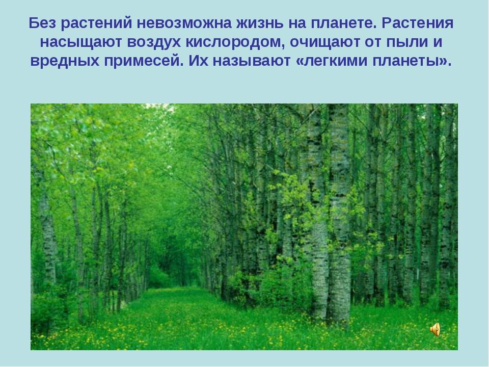 Без растений невозможна жизнь на планете. Растения насыщают воздух кислородом...