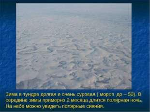Зима в тундре долгая и очень суровая ( мороз до – 50). В середине зимы пример
