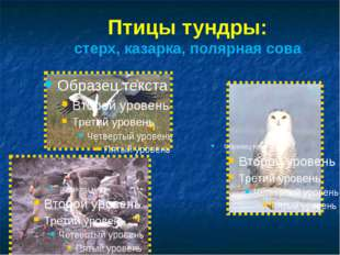 Птицы тундры: стерх, казарка, полярная сова