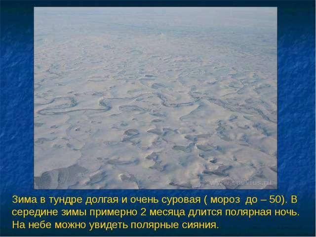 Зима в тундре долгая и очень суровая ( мороз до – 50). В середине зимы пример...
