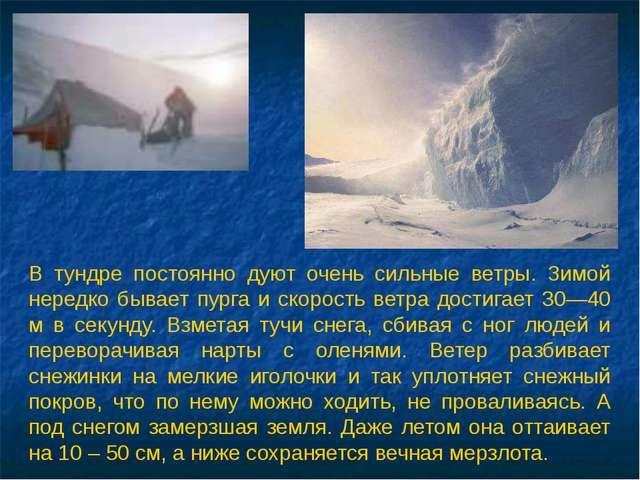В тундре постоянно дуют очень сильные ветры. Зимой нередко бывает пурга и ско...