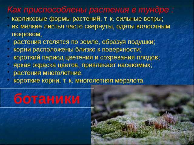 Как приспособлены растения в тундре : карликовые формы растений, т. к. сильны...