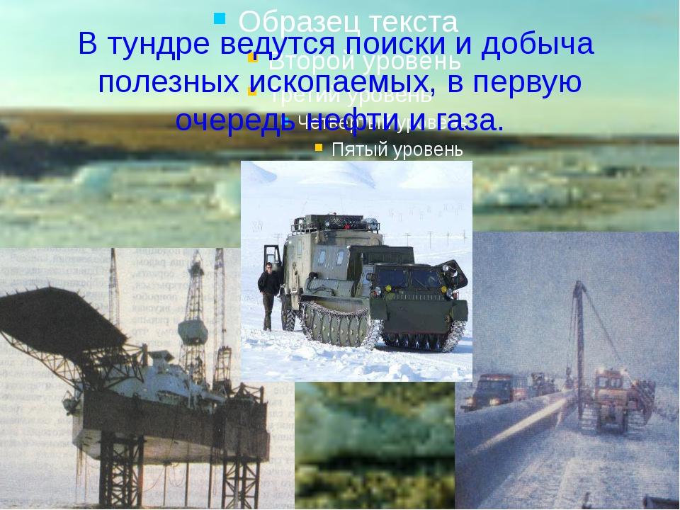 В тундре ведутся поиски и добыча полезных ископаемых, в первую очередь нефти...