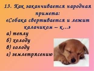 13. Как заканчивается народная примета: «Собака свертывается и лежит калачико