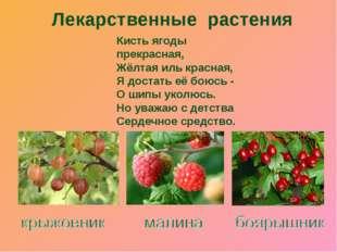 Кисть ягоды прекрасная, Жёлтая иль красная, Я достать её боюсь - О шипы уколю