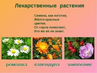 Лекарственные растения Семена, как коготки, Жёлто-красные цветки. От горла по